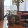 shimaumaさんのお部屋写真 #4