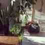 cloudia_gardenさんのお部屋写真 #4