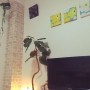 aoi513さんのお部屋写真 #3