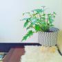 risaさんのお部屋写真 #4