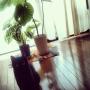 Misatoさんのお部屋写真 #2
