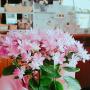 hitomiさんのお部屋写真 #2
