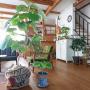 bibi.karuさんのお部屋写真 #2