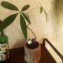 waniさんのお部屋写真 #4