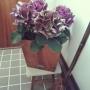 tocotocoさんのお部屋写真 #3