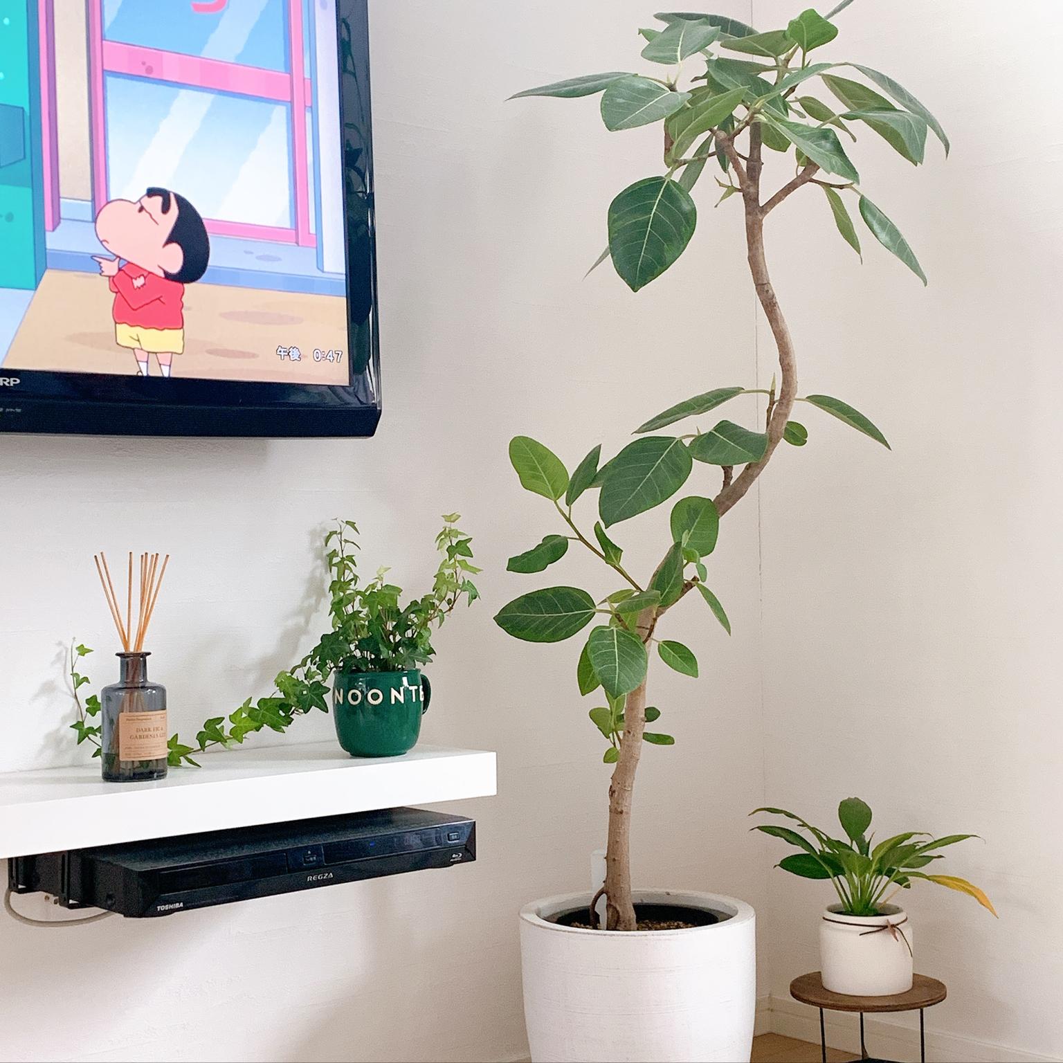 観葉植物/リビングのインテリア実例 - 2020-08-15 17:40:04