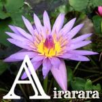 airarara