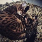 Live-Love-Leopardさんのお部屋