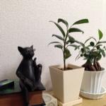 Shiinaさんのお部屋