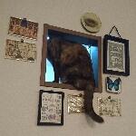 tokiさんのお部屋
