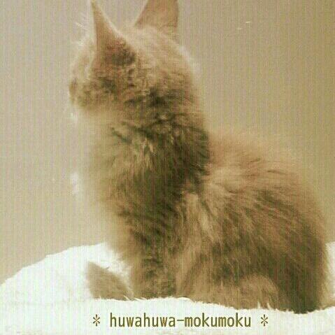 huwahuwa.mokumokuさんのお部屋