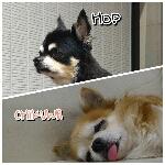 Hop_Chikuwaさんのお部屋