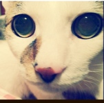 perro_gatoさんのお部屋