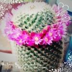 cactus9さんのお部屋