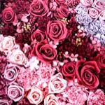 rosesさんのお部屋