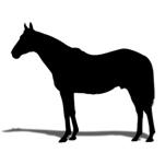 cheval_noirさんのお部屋