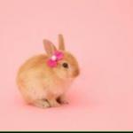 Rabbit_houseさんのお部屋