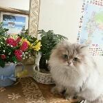 mistycatさんのお部屋