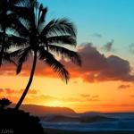 alohaさんのお部屋