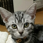CatClip