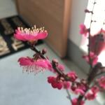 hamuさんのお部屋