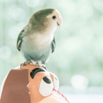 hinatabird