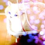 mimi_cさんのお部屋