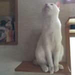 minamikazeさんのお部屋