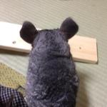 kurimaruさんのお部屋