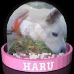 haru0_44さんのお部屋