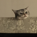 pyoko071さんのお部屋