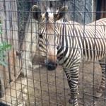 zebraさんのお部屋