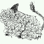rabbit-long-earさんのお部屋