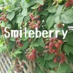 Smileberryさんのお部屋