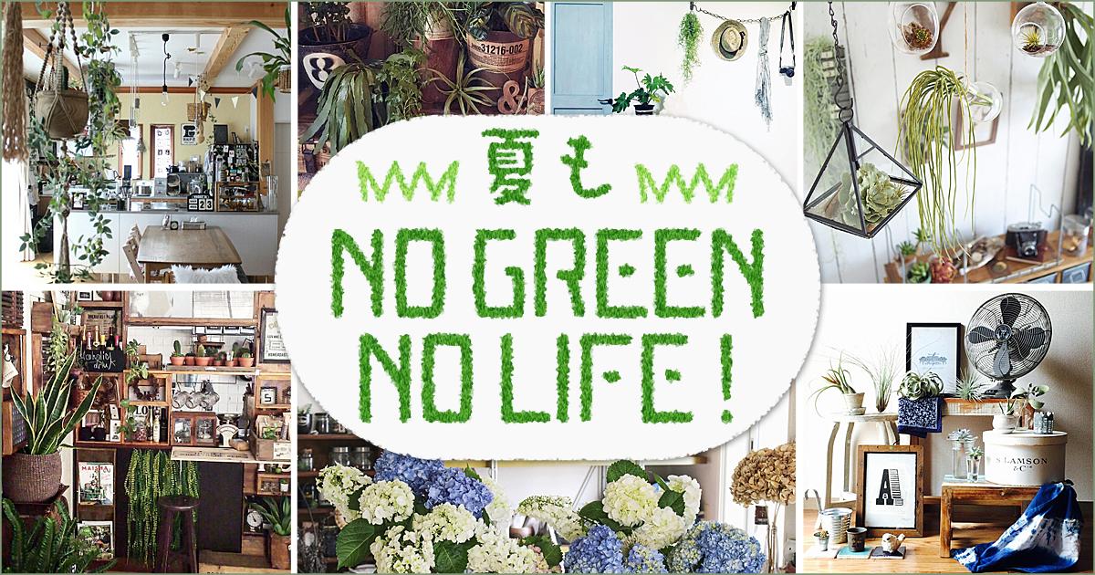 夏もNO GREEN NO LIFE!