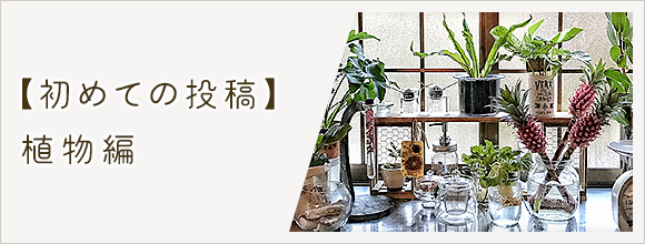 RoomClipのイベント 初めての投稿 植物編