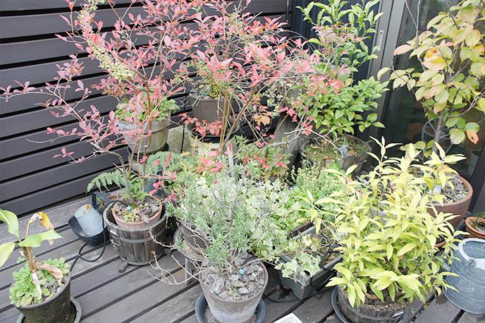 ベランダに植物がたくさん !