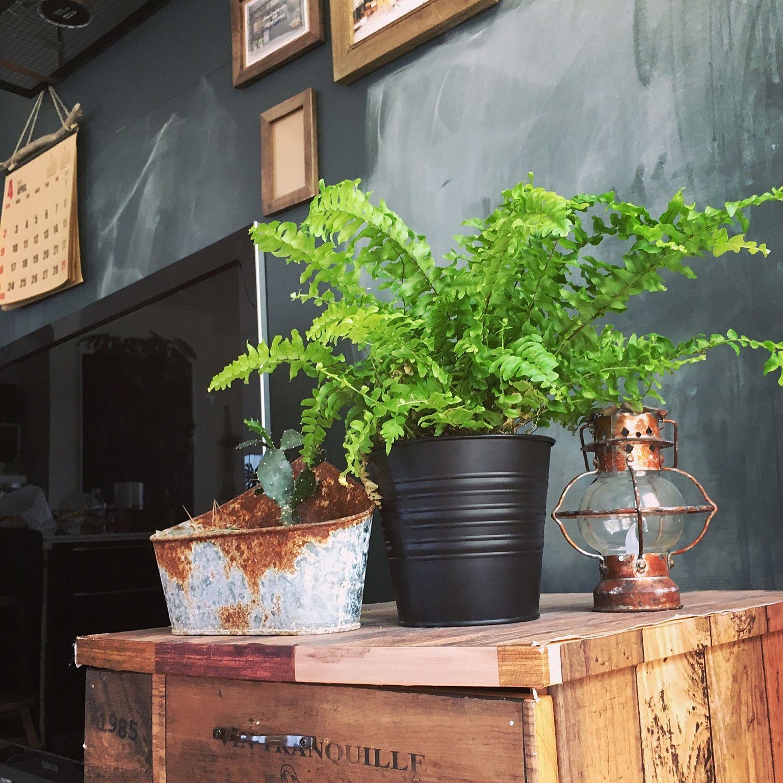 【木曜日】お家の植物を記録しよう♪