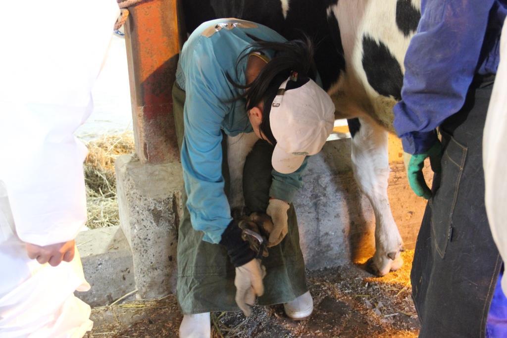 2級認定牛削蹄師認定講習会・認定試験が開催されました