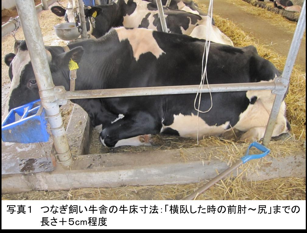 乳用牛の生産性を高めるカウコンフォートに配慮した牛舎構造
