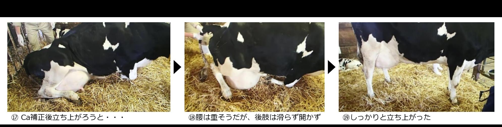 牛の起立様式からみた牛房での有孔マットの応用例