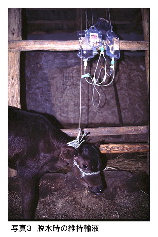 農場のバイオセキュリティを考える ≪第8回≫酪農現場で問題になる感染症Ⅱ