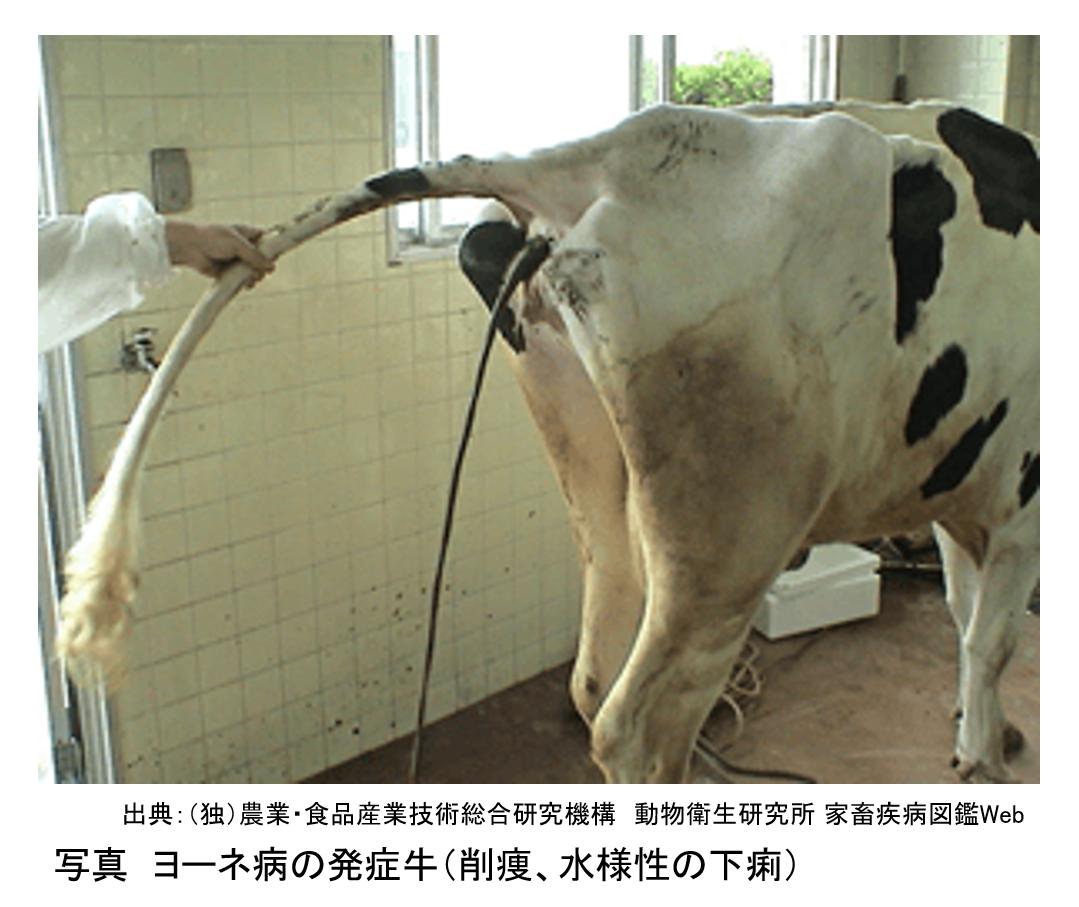 農場のバイオセキュリティを考える ≪第9回≫酪農現場で問題になる感染症Ⅲ