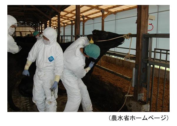 農場のバイオセキュリティを考える ≪第11回≫「2010宮崎口蹄疫」の現地対策から見えたもの
