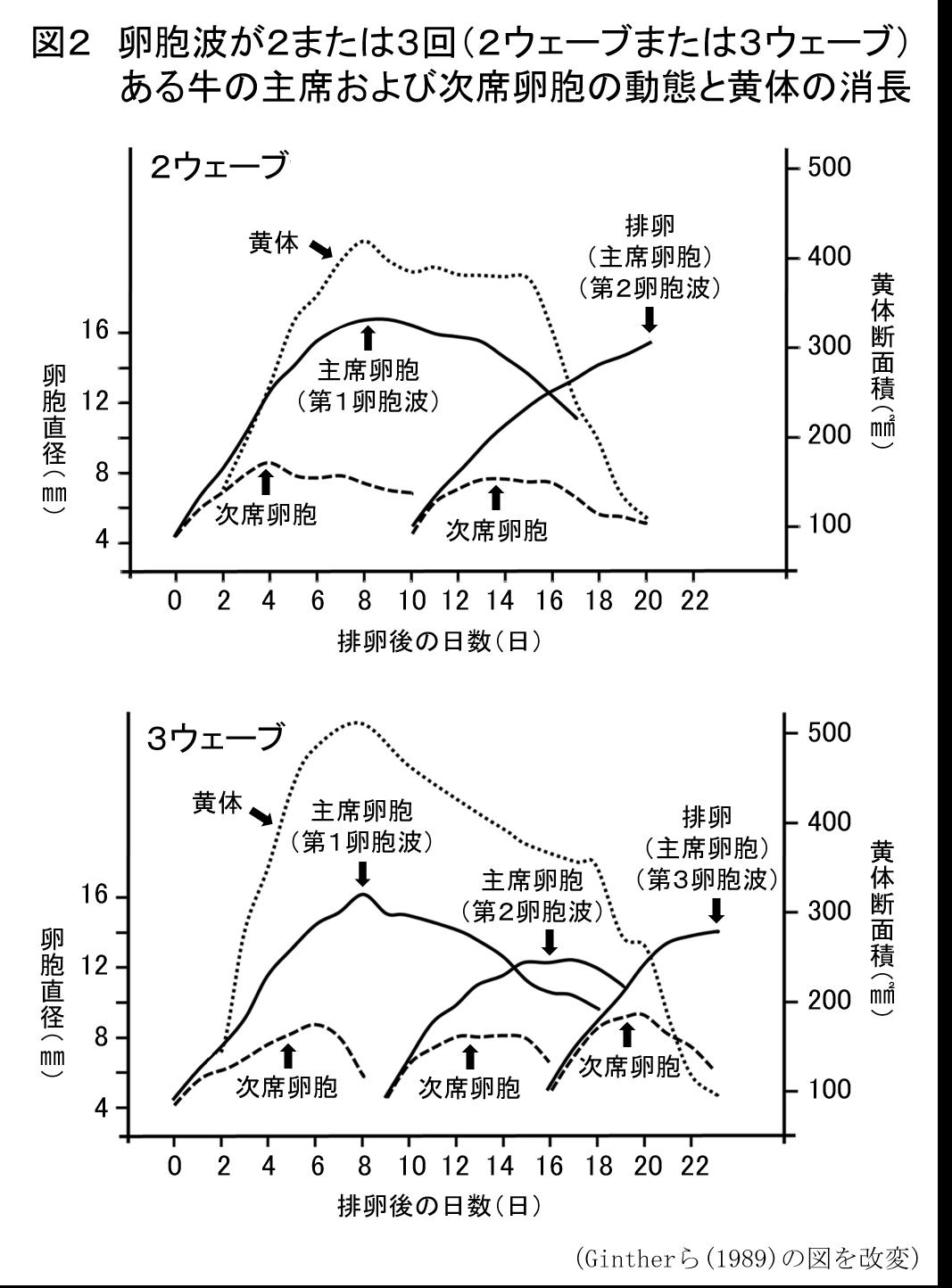 牛の繁殖管理の理論と実際 ≪第3回≫牛の発情周期における卵胞波