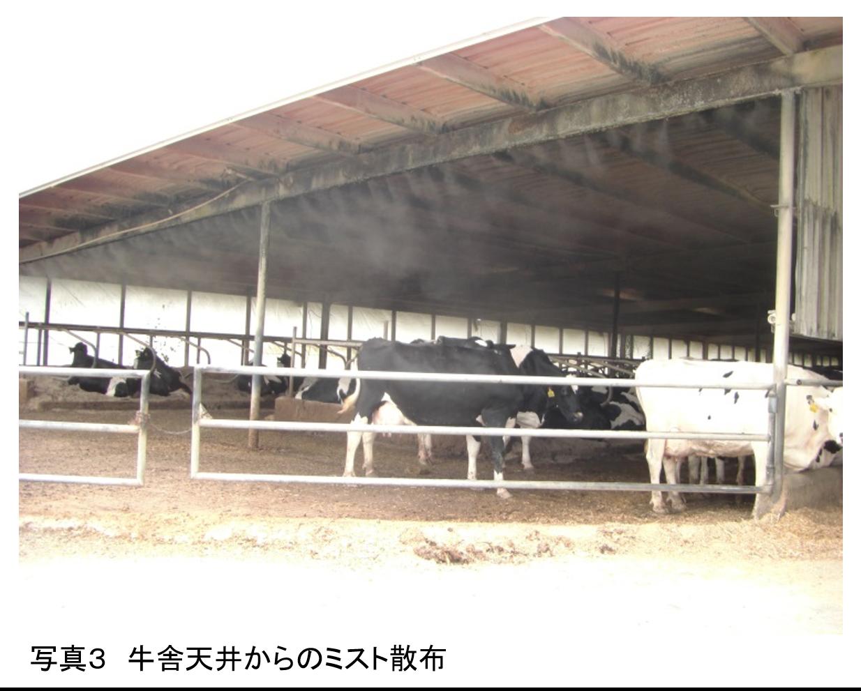 牛の繁殖管理の理論と実際 ≪第4回≫夏から初秋の受胎率低下の原因を探る
