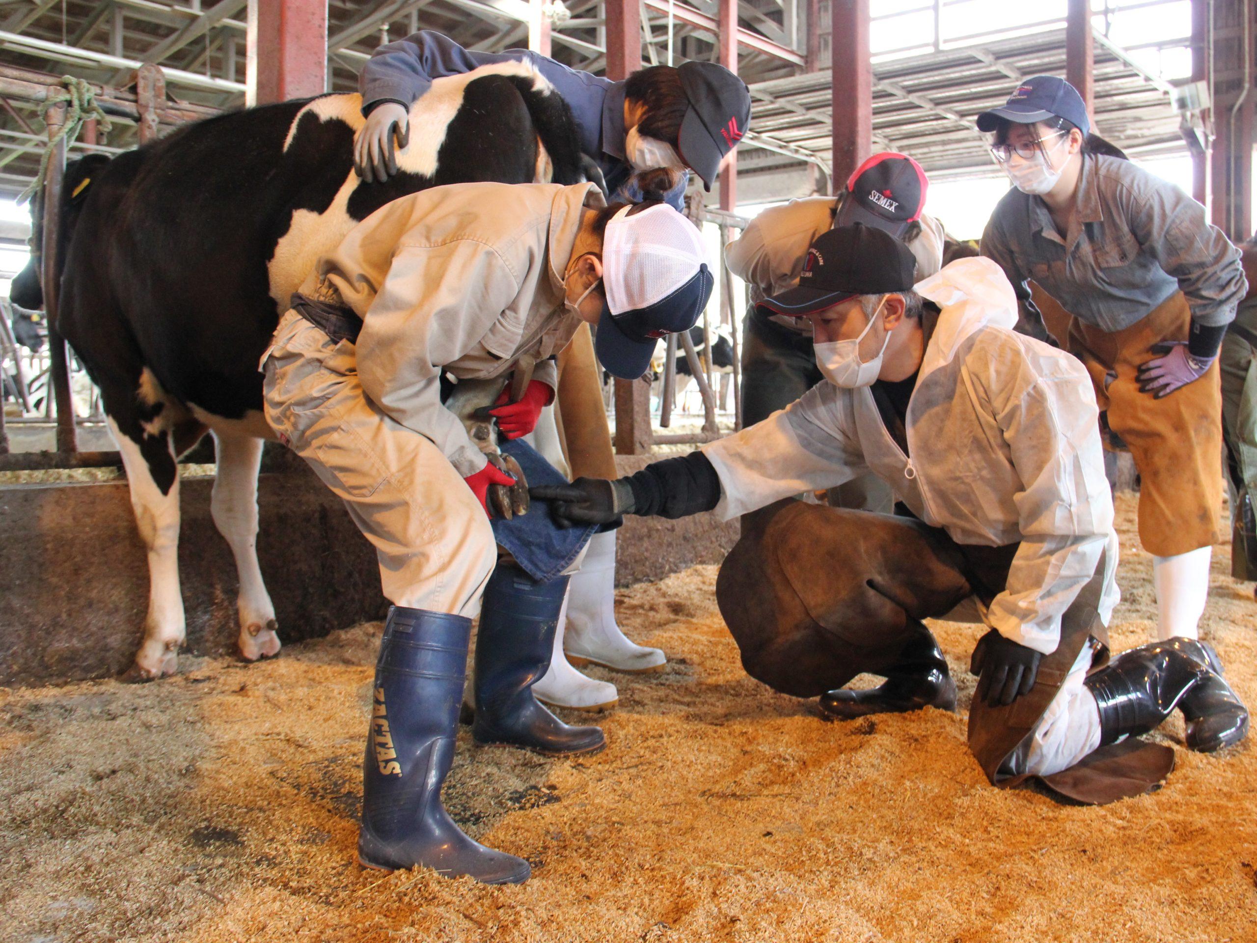 2021年度2級認定牛削蹄師講習会・認定試験が開催されました