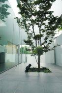 M HOUSE/個人宅 (エム ハウス):庭全景