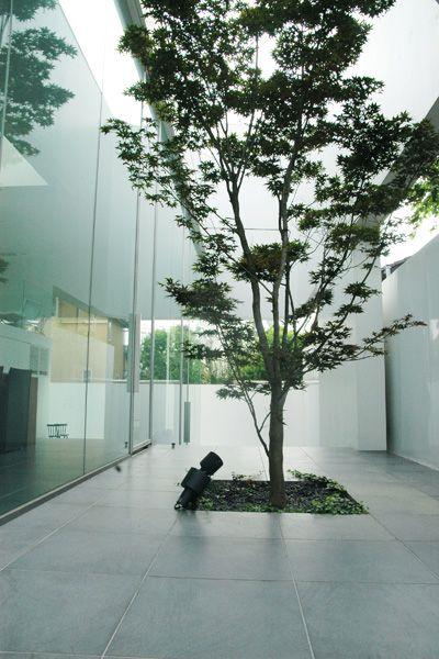 M HOUSE/個人宅 (エム ハウス)庭全景