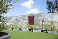 Atelier Pom 目黒中町 (アトリエ ポム):屋上/温室の小屋と芝